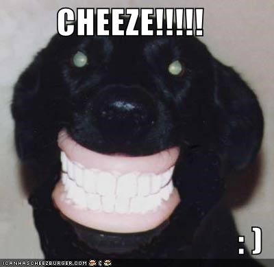 Cheezburger Image 470378240