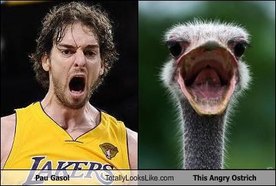 angry,animals,basketball,Lakers,ostrich,pau gasol,sports