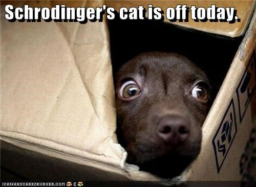 Schrodinger's cat is off today.