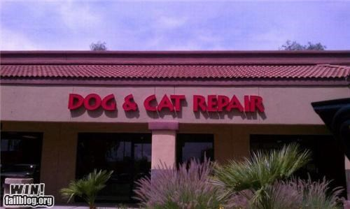 animals awesome at work store store name veterinarian - 4704275456