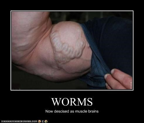 WORMS Now descised as muscle brains