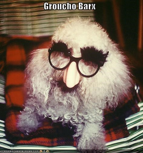 barks,eyebrows,glasses,groucho marx,nose,poodle,pun,similar sounding,surname