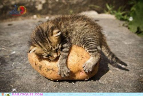 acting like animals cat clinging famous fries kitten let go love mashed potatoes Movie never potato quote second thoughts titanic - 4704776192