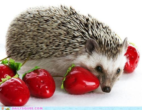 advice,berry,fake,hedgehog,nice,noms,pun,strawberries,strawberry