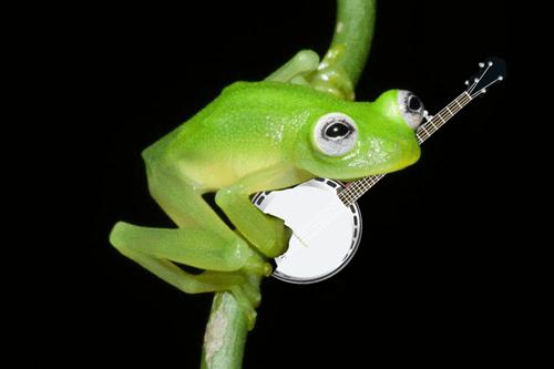 muppets kermit frog - 470533