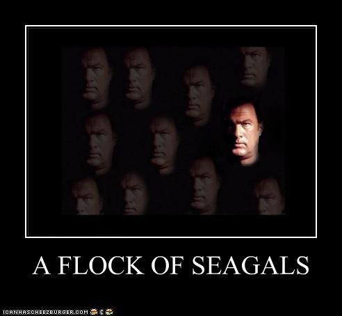 actor celeb demotivational funny Hall of Fame roflrazzi steven seagal - 4705555456