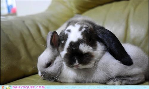 baby bunnies bunny cuddling holland lop napping Pokémon rabbit rabbits reader squees - 4706219520