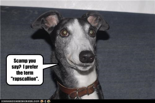 preference rapscallion scamp term whippet - 4706771712