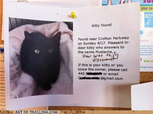cat IRL lost mustache sign - 4706827520