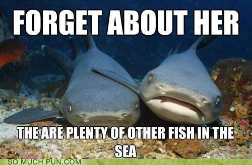 captain obvious,comforting,compassionate shark friend,condolences,fish,meme,obvious,other,sea,shark,sharks