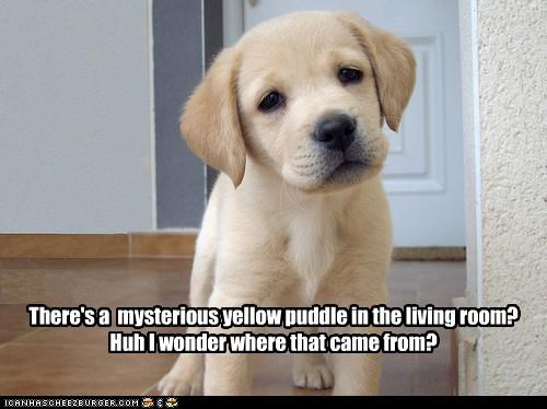 There's a mysterious yellow puddle in the living room? Huh I wonder where that came from?