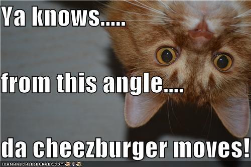 Cheezburger Image 4707720704