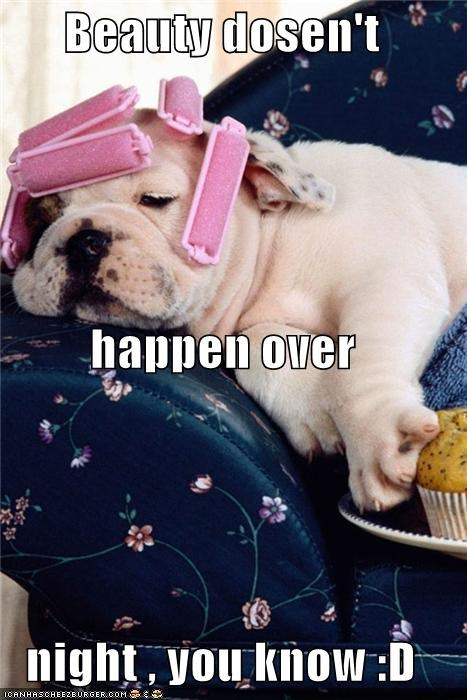 advice,beauty,bulldog,curlers,does not,happen,overnight,puppy,reason,reminder