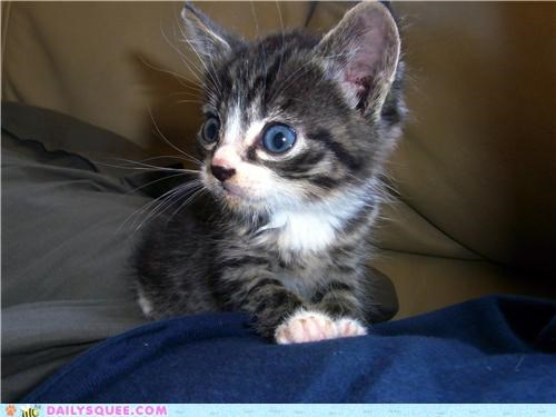 baby cat kitten reader squees surprised wide eyed - 4707757056
