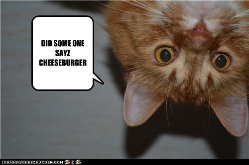 Cheezburger Image 4708270336