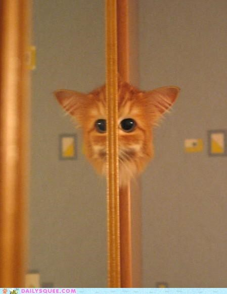 acting like animals cat FAIL mirror reflection stealth tabby - 4708320768