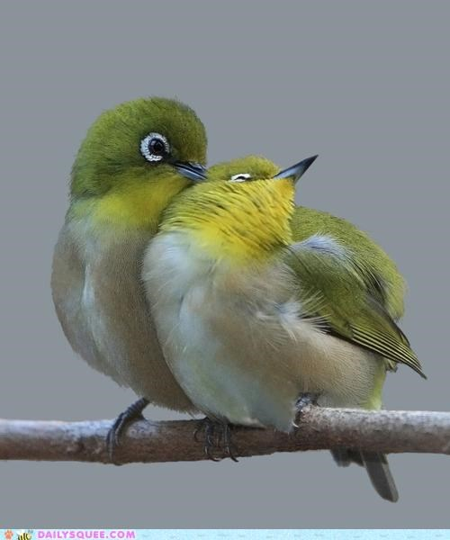 bird birds list literally love lovebirds one hand shortlist - 4708350720