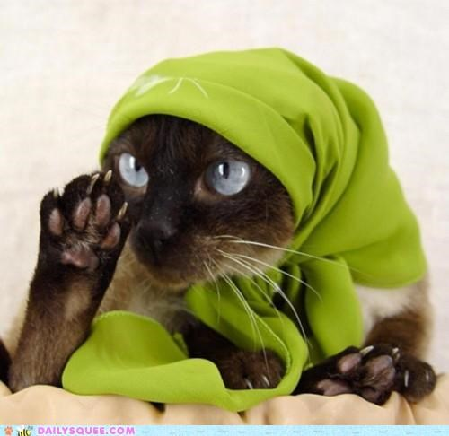 acting like animals cat catnip dressed up fortune fortune teller future mysteries predicting price psychic services shawl siamese tarot - 4708382976