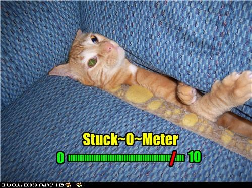 caption,captioned,cat,measurement,measuring,meter,stuck,tabby