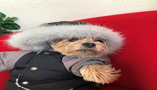 dogs twitter missy elliott style funny - 4708869