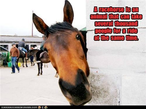 A racehorse is an animal that can take several thousand people for a ride at the same time.