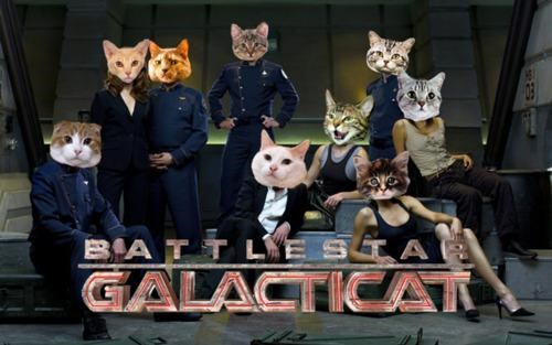 Battlestar Galactica battlestar galacticat cat pic Caturday tv shows - 4709945088