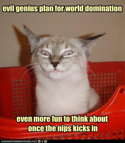 after best of the week caption captioned cat catnip contemplating domination effect evil fun genius Hall of Fame kicking in nip once plan think thinking world - 4710234880
