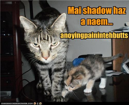 annoying,butt,caption,captioned,cat,Cats,has,kitten,name,pain,shadow