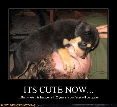 bad idea cute dogs puppy - 4710864896