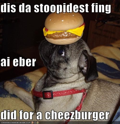 Cheezburger Image 4711036160