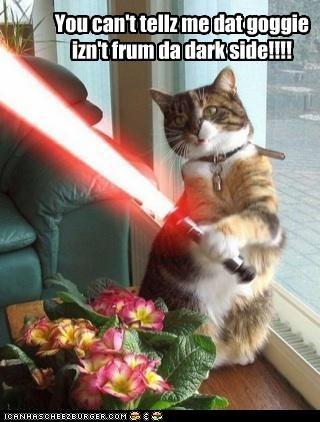 You can't tellz me dat goggie izn't frum da dark side!!!!