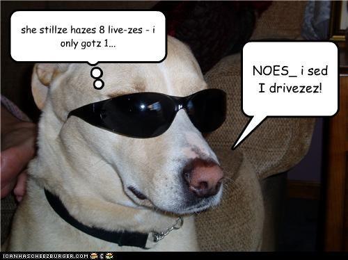 NOES_ i sed I drivezez! she stillze hazes 8 live-zes - i only gotz 1...