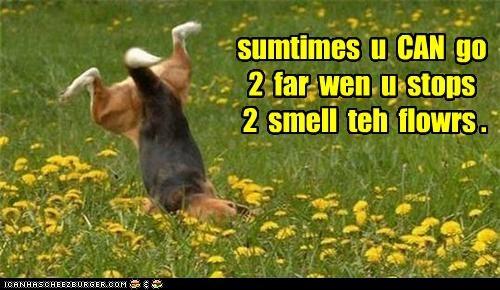 sumtimes u CAN go 2 far wen u stops 2 smell teh flowrs .