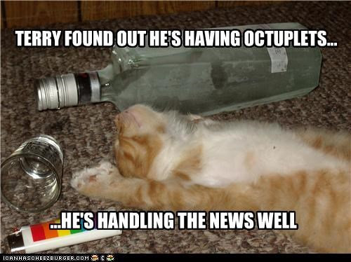 Babies caption captioned cat discovered discovery drunk having news passed out well - 4712564224