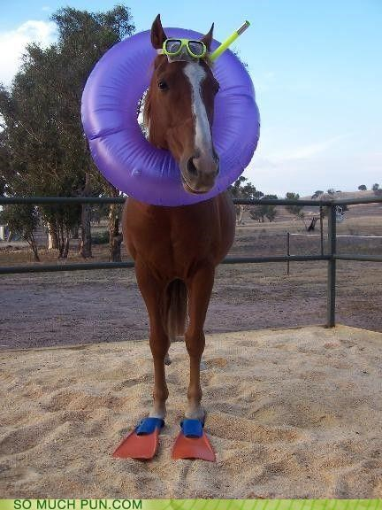 flippers,goggles,horse,intertube,literalism,sea,seahorse,snorkel