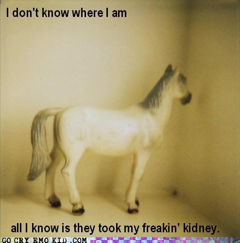 bad idea,emolulz,horse,kidney