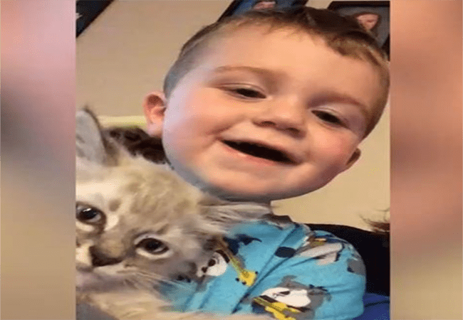 instagram cute Cats funny Video - 4716293