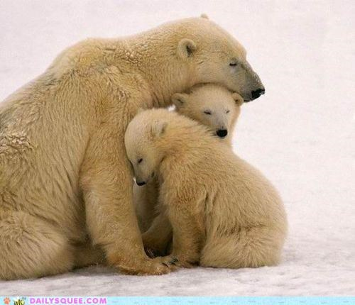 asleep awake barely bear bears cub cubs do not want family monday mondays polar bear polar bears pun waking up