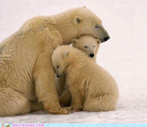 asleep awake barely bear bears cub cubs do not want family monday mondays polar bear polar bears pun waking up - 4716411136