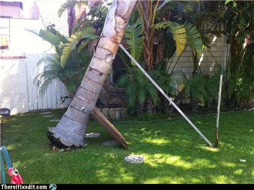 gardening holding it up nature Palm Tree trees - 4717718784