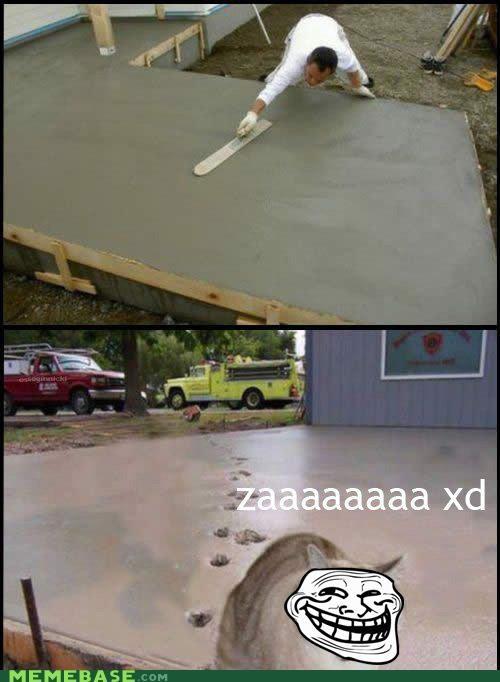 animemes cat concrete IRL troll troll face - 4717748736