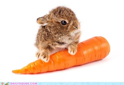 anticipation baby bracing Bunday bunny carrot eating excited happy happy bunday nom noms rabbit - 4717846528