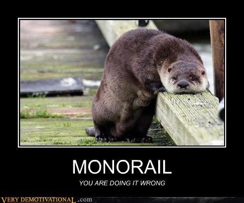 animals hilarious lazy monorail wtf