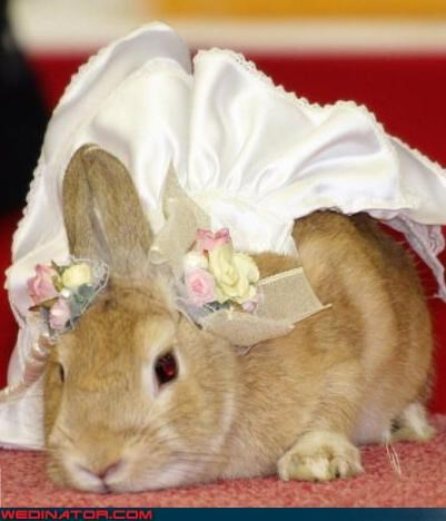 animals funny wedding photos wedding - 4718121216