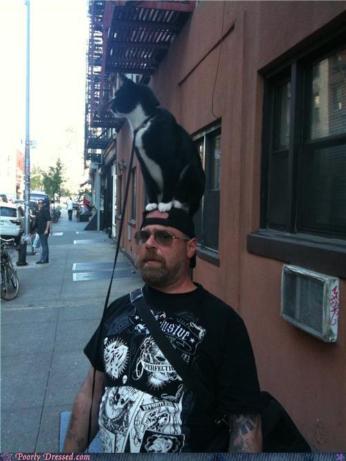 cat hat - 4718303488