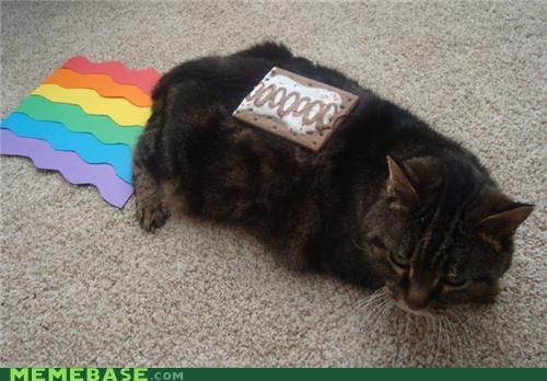 IRL Nyan Cat poptart rainbows - 4718458624