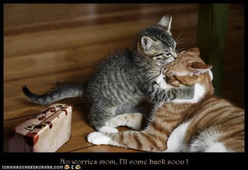 brb caption captioned cat Cats consoling departing kitten leaving mother no worries promise suitcase tabby - 4718583040