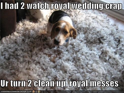 beagle,clean up,compromise,excuse,mess,payback,revenge,royal,royal wedding,trade,watch,wedding