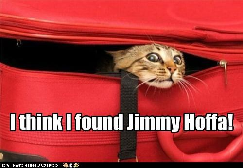 afraid,caption,captioned,cat,found,horrified,jimmy hoffa,suitcase,think