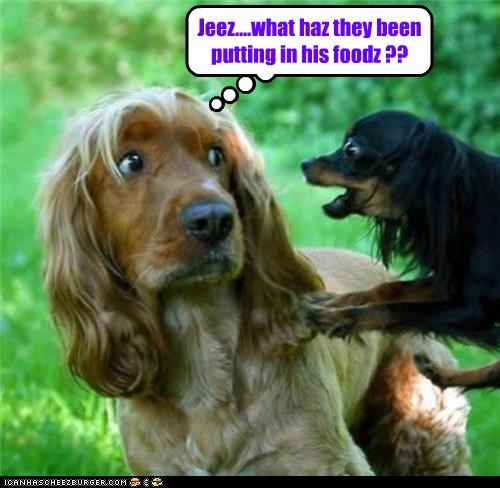 chihuahua cocker spaniel confused food ingredient jeez mixed breed noms putting question what wondering - 4719177216